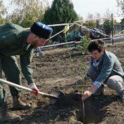 У Крестовоздвиженского храма Михайловска казаки помогли посадить деревья
